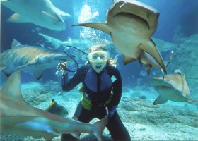 Shark dive Underwater World